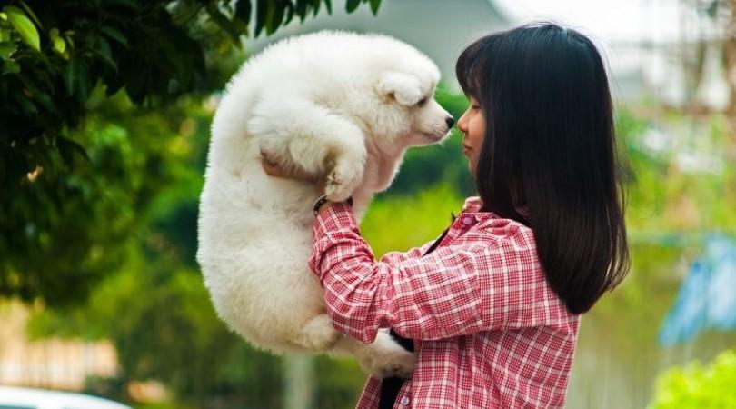 Гипоаллергенные собаки для аллергиков: мелкие, средние, крупные