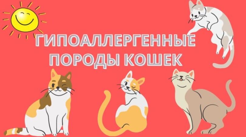 Аллергия на кошек? Выход есть – гипоаллергенные породы кошек для аллергиков