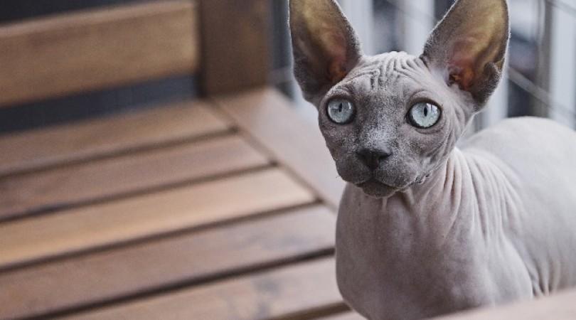 Аллергия на кошек: как проявляется, что делать и какие анализы нужно сдать