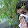Аллергия на березу: куда уехать от пыльцы на период цветения и чем лечить поллиноз