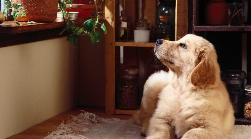 Аллергия на собаку: может ли быть, что делать, чем лечить детей и взрослых