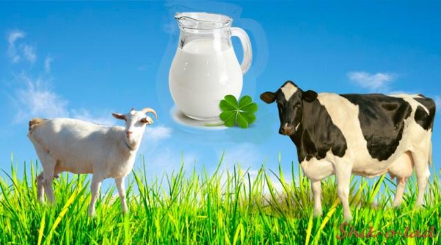 Козье и коровье молоко