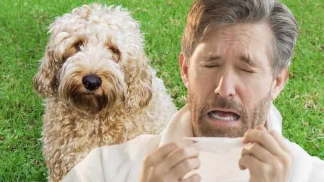 Как выглядит аллергия на собак на коже