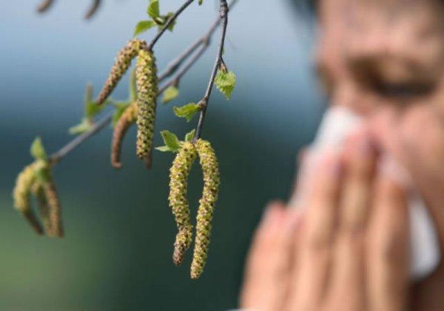 Березовая пыльца