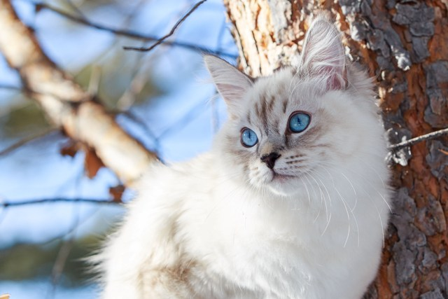 Кошки для аллергиков: породы кошек, названия, описание с фото, правила проживания аллергика с кошкой и рекомендации аллергологов