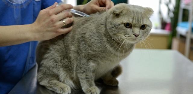 укол для кота