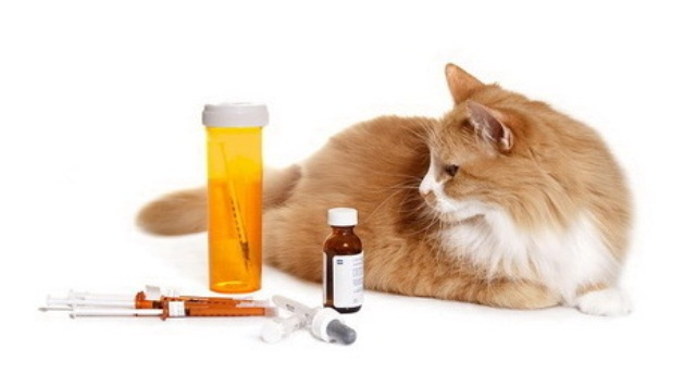 кот и лекарство